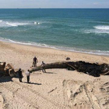 قرار لوزارة البيئة في حكومة الاحتلال يحظر نشر تفاصيل الكارثة البيئية قبالة سواحل الأراضي المحتلة